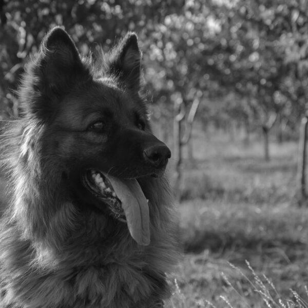 Zwierzęta w moim życiu: Tara