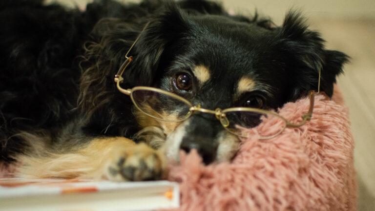 Stwórz dziennik dla swojego psa lub kota