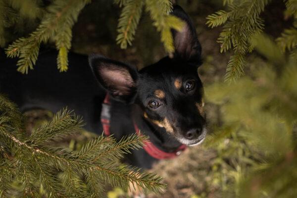 Fotografia – jak pracować z psim modelem?